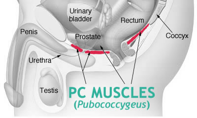 what is pc muscle